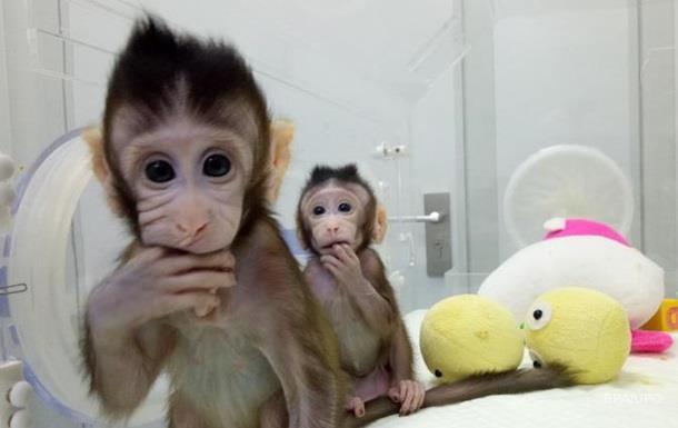 Людина наступна. Що дає клонування мавп