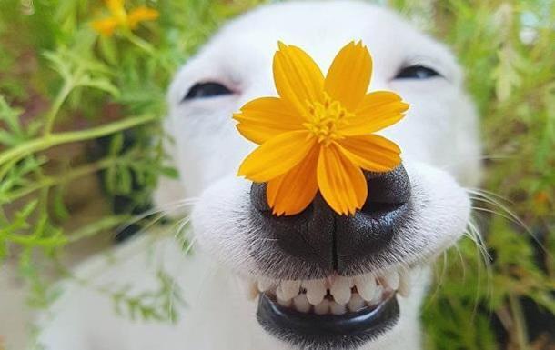В Сети появились фото  собаки-улыбаки  из Таиланда