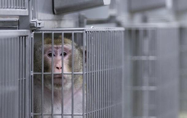 Volkswagen обіцяє більше не проводити експериментів над тваринами