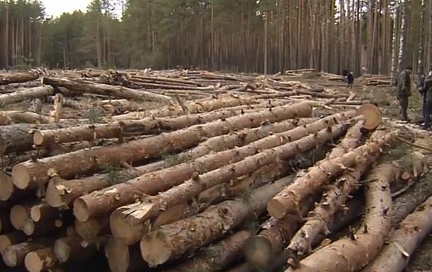 Лес вокруг охотничьих угодий Януковича массово вырубают