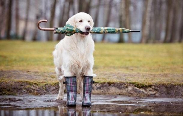 В Україні обіцяють дощі