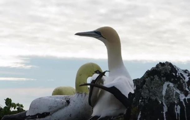 В Новой Зеландии умерла  самая одинокая птица в мире