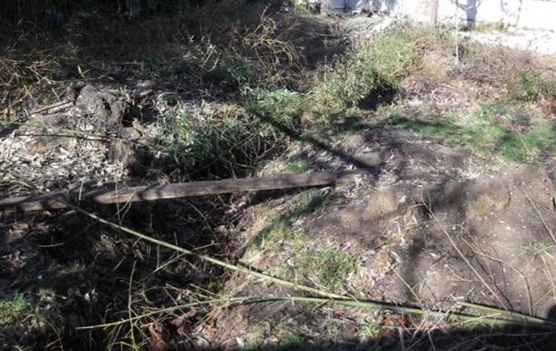 В Ялте вырубили бамбуковую рощу – СМИ