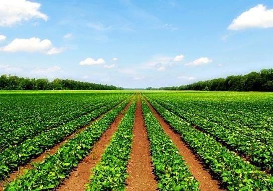Аграрии и госбюджет-2018: главные риски и опасения рынка