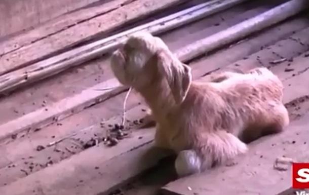 В Малайзии на ферме родился  козленок-циклоп