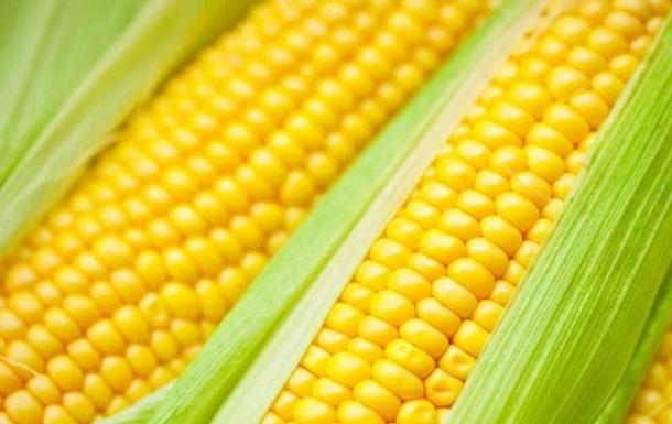 А вы используете инокулянты для кукурузы?