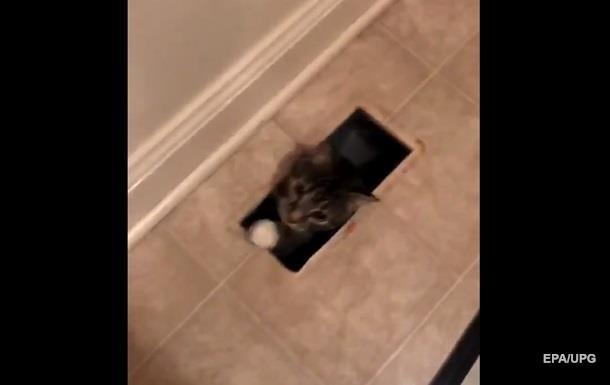 Загадочное появление кота в доме взорвало Сеть