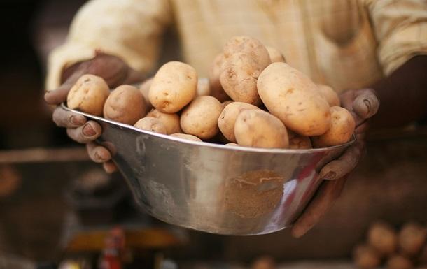Украина экспортировала в Беларусь картофеля на $2,6 млн