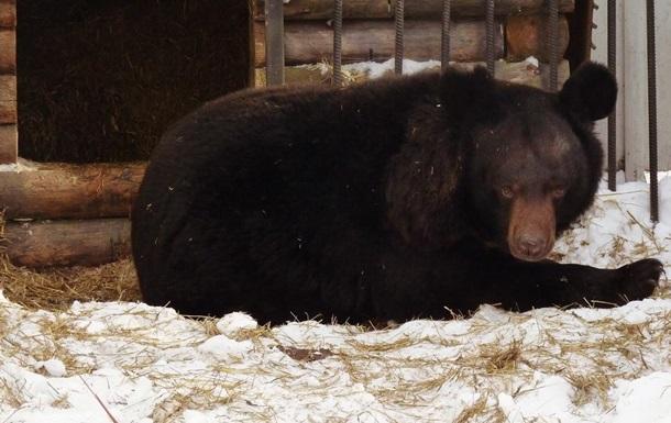 В РФ медведь проснулся и впал в апатию