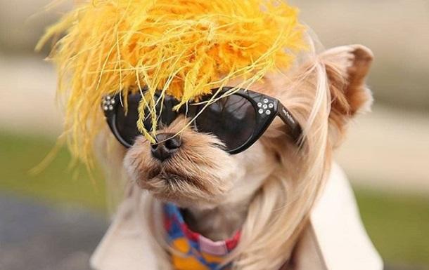 СМИ показали собаку-стилягу с Недели моды в Париже