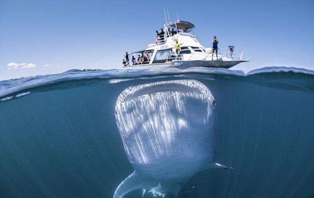 ЗМІ показали рідкісні фото з гігантською акулою