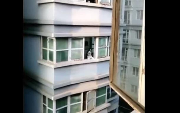 Ответившую на крик соседа хаски сняли на видео