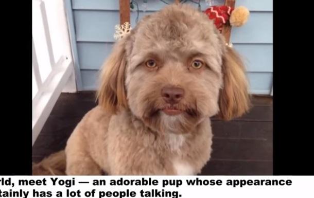 Сеть удивила собака с  человеческим лицом