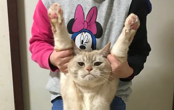 В Японії набирає обертів флешмоб Витягни кота