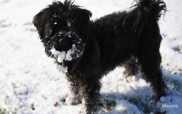 У Київській області відкрили справу за знущання над собакою