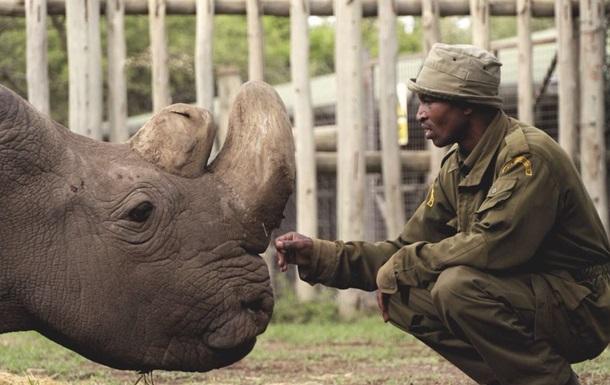 У Кенії помер останній самець північного білого носорога