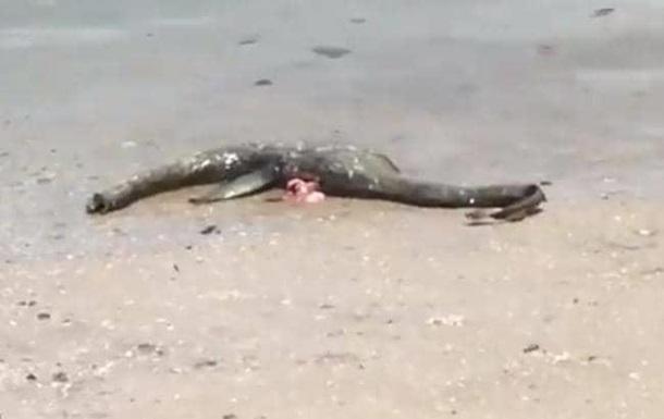 В США на пляже нашли загадочное существо