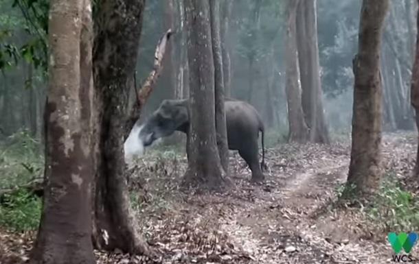 Извергающую дым слониху сняли на видео