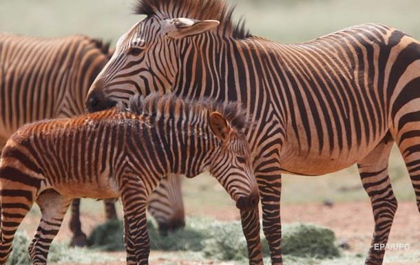 ООН: до 2100 року в Африці вимре половина видів тварин