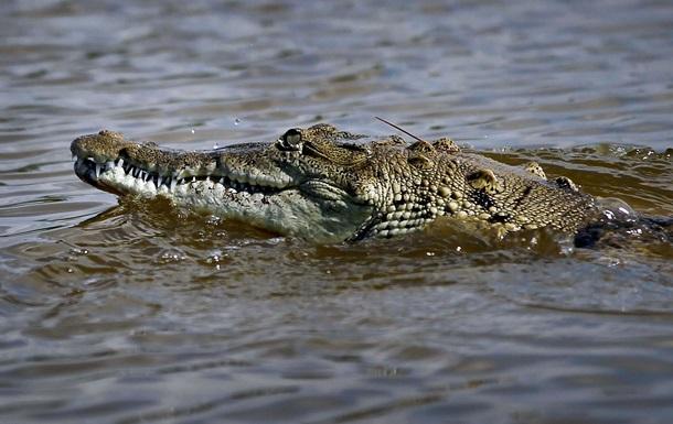 Пограничники сообщили о крокодилах на службе