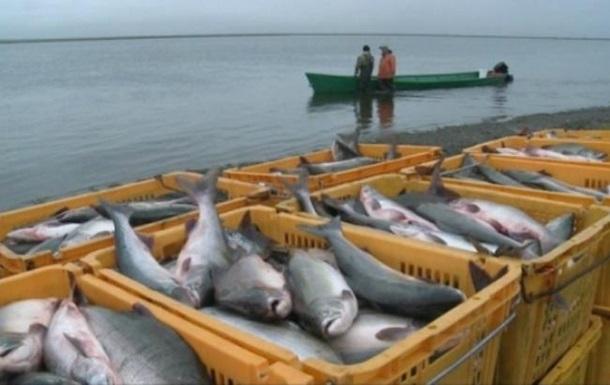 В Україні заборонили масовий вилов риби