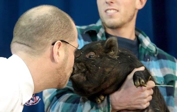 В США директор школы поцеловал свинью