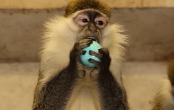 В зоопарке Харькова животных угостили крашенками