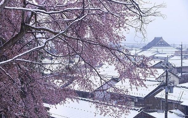 В Японии цветущие сакуры засыпало снегом