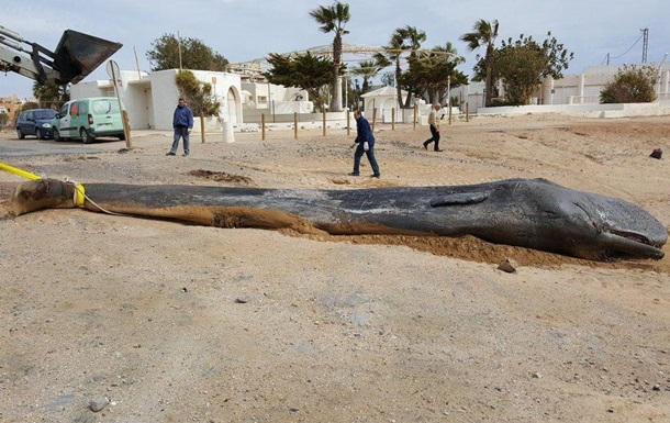 В Испании в желудке кита нашли 29 кг пластика