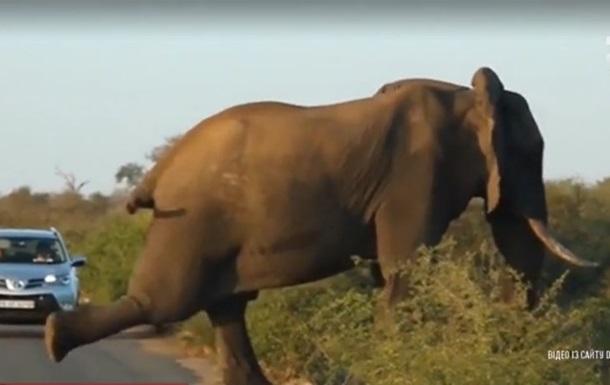 В Южной Африке слон сделал зарядку посреди дороги
