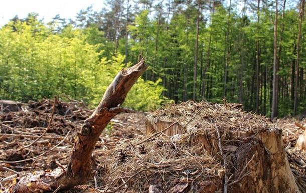 Суд ЄС: Вирубка Польщею дерев у Біловезькій пущі - незаконна