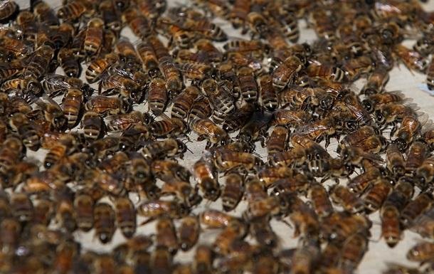 В России пчелы сорвали авиарейс в Крым