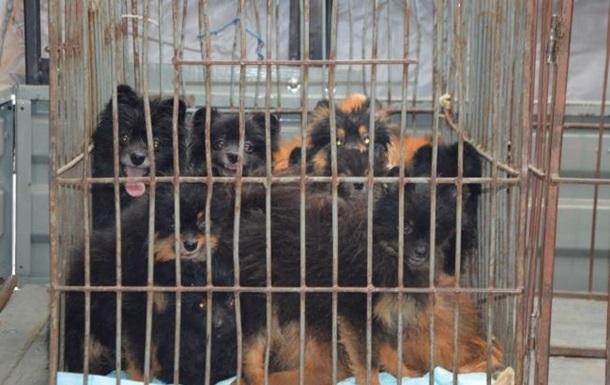 В РФ у жительницы многоэтажки конфисковали сотню собак