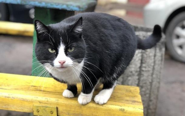 В Одесі витратять 500 тисяч гривень на кастрацію котів
