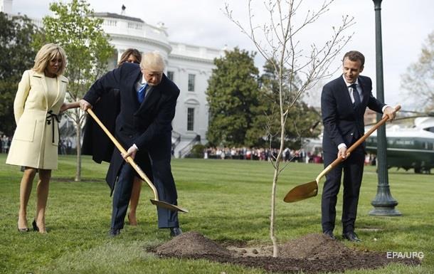 С лужайки Белого дома исчез дуб, привезенный Макроном из Франции - СМИ