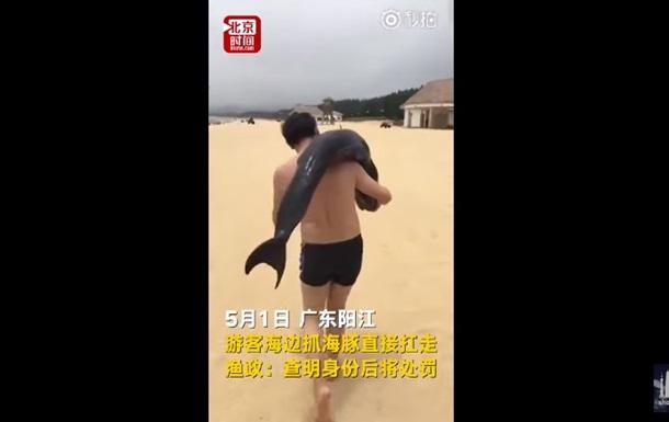 Похищение умирающего дельфина туристом сняли на видео