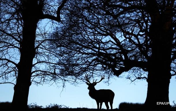 У США знайшли двоголове оленя