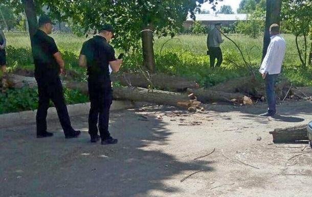У Черкасах на дітей впало дерево: є постраждалі