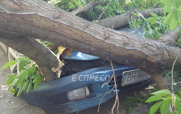 В Киеве дерево повредило сразу четыре автомобиля