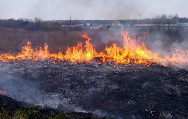 В Херсонской области горит 100 га леса