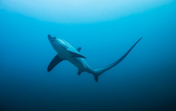 Акула десять минут таскала за собой рыбака с лодкой