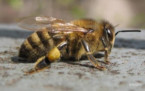 В селах Запорожской области массово вымерли пчелы