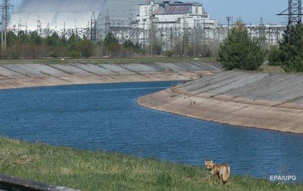 Навіть ведмеді. Природа повертається в Чорнобиль