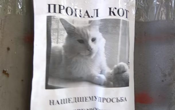 Сеть удивила оптическая иллюзия с котом