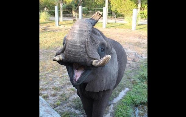 Собственный слон Майкла Джексона убежал извольера