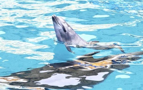 В дельфинарии Одессы детеныш родился во время шоу