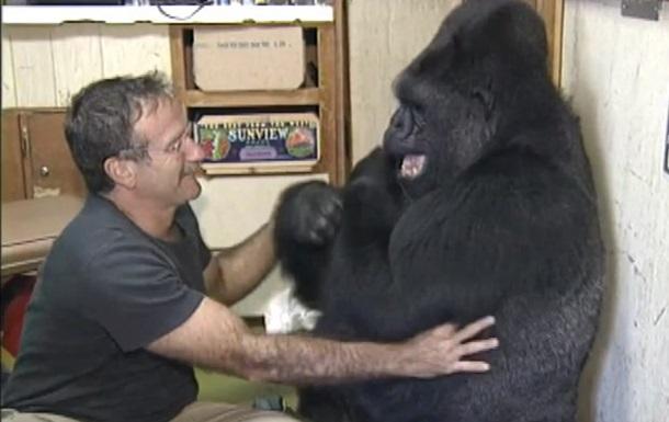 Умерла 46-летняя горилла Коко с человеческим IQ