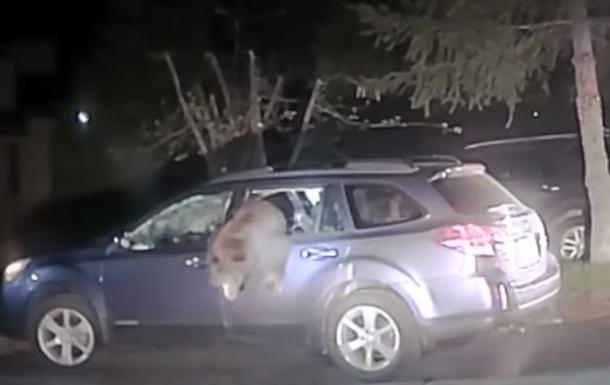 В США медведь залез в автомобиль и застрял