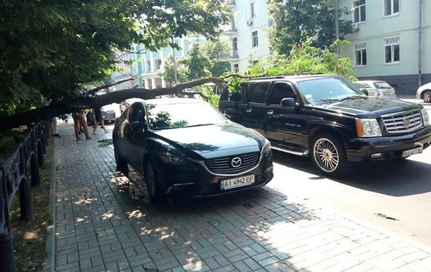 В центре Киева упавшее дерево повредило авто
