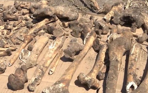 Під Кропивницьким знайшли братську могилу німців